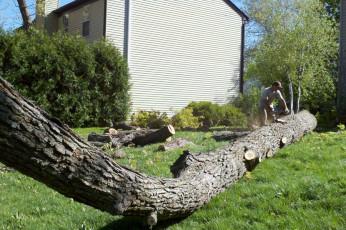 tree-service-removal