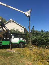 natural-tree-service-company-gilberts-il-5